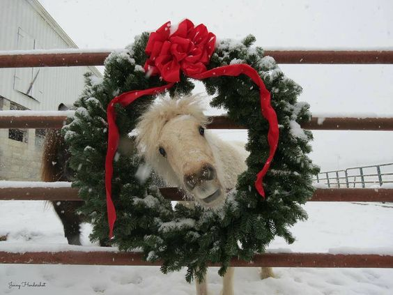 christmas pony image